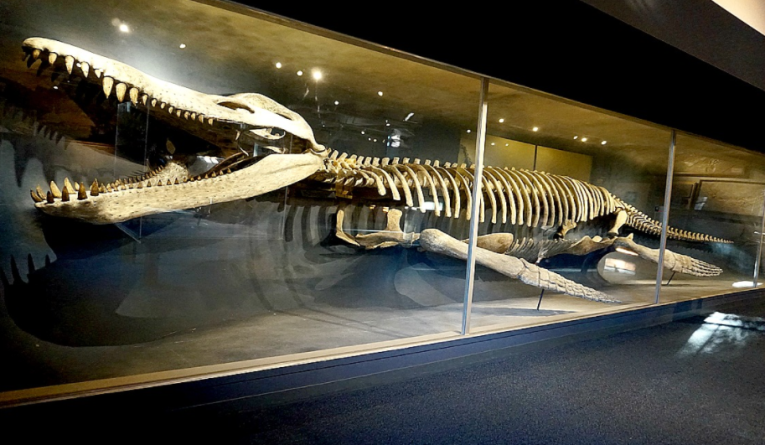 Kronosaurus. Photo credit: travelingmom.com